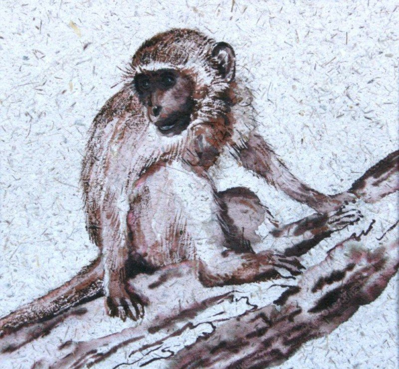 "<span style=""float:left"">Young Vervet</span> <span style=""float:right""><a href=""http://www.carolbarrett.co.uk/paintings/young-vervet/?from=/primates-sold/"">More info »</a></span>"