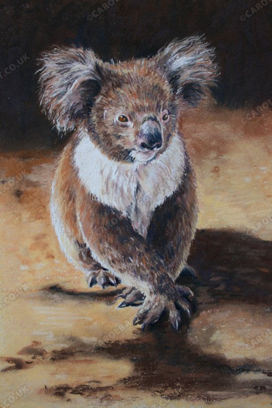 """<span style=""""float:left"""">Cute with Claws</span><span style=""""float:right""""><a href=""""http://www.carolbarrett.co.uk/paintings/cute-with-claws/?from=/australian-wildlife-for-sale/"""">More info »</a></span>"""