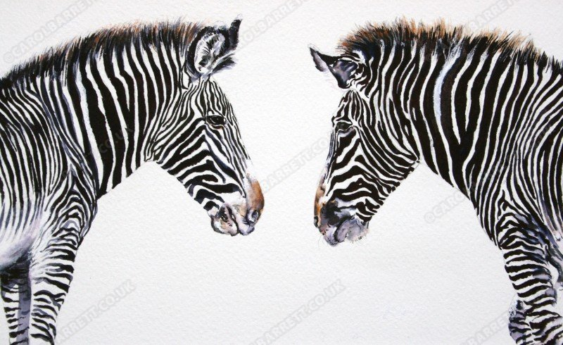 """<span style=""""float:left"""">Stripes Converge ~ included in 2011 portfolio for the Wildlife Artist of the Year</span><span style=""""float:right""""><a href=""""http://www.carolbarrett.co.uk/paintings/stripes-converge-included-in-2011-portfolio-for-the-wildlife-artist-of-the-year/?from=/african-wildlife-sold/"""">More info »</a></span>"""