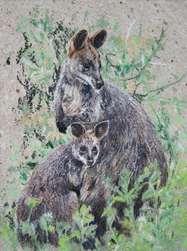 "<span style=""float:left"">Tammar Wallaby with Joey</span> <span style=""float:right""><a href=""http://www.carolbarrett.co.uk/paintings/tammar-wallaby-with-joey/?from=/australian-wildlife-for-sale/"">More info »</a></span>"