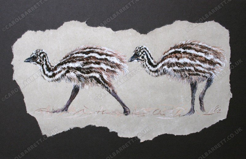 "<span style=""float:left"">Emu chicks</span> <span style=""float:right""><a href=""http://www.carolbarrett.co.uk/paintings/emu-chicks-2/?from=/on-specialty-paper-sold/"">More info »</a></span>"