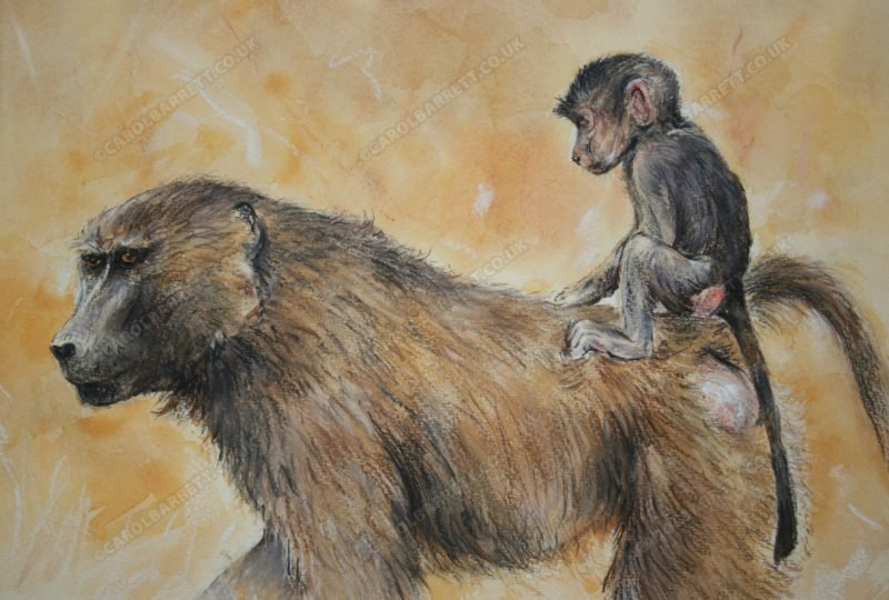 """<span style=""""float:left"""">Safely Aboard (Olive Baboon)</span><span style=""""float:right""""><a href=""""http://www.carolbarrett.co.uk/paintings/safely-aboard-olive-baboon/?from=/primates-sold/"""">More info »</a></span>"""
