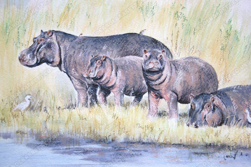 "<span style=""float:left"">Water Magnets</span> <span style=""float:right""><a href=""http://www.carolbarrett.co.uk/paintings/water-magnets-2/?from=/african-wildlife-for-sale/"">More info »</a></span>"
