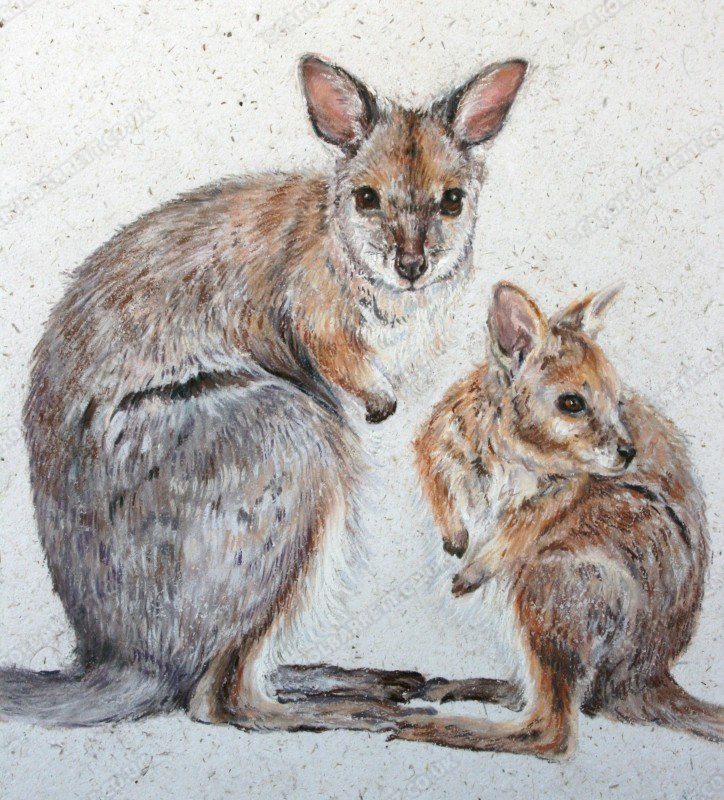 "<span style=""float:left"">Toe to Toe</span> <span style=""float:right""><a href=""http://www.carolbarrett.co.uk/paintings/toe-to-toe/?from=/australian-wildlife-for-sale/"">More info »</a></span>"