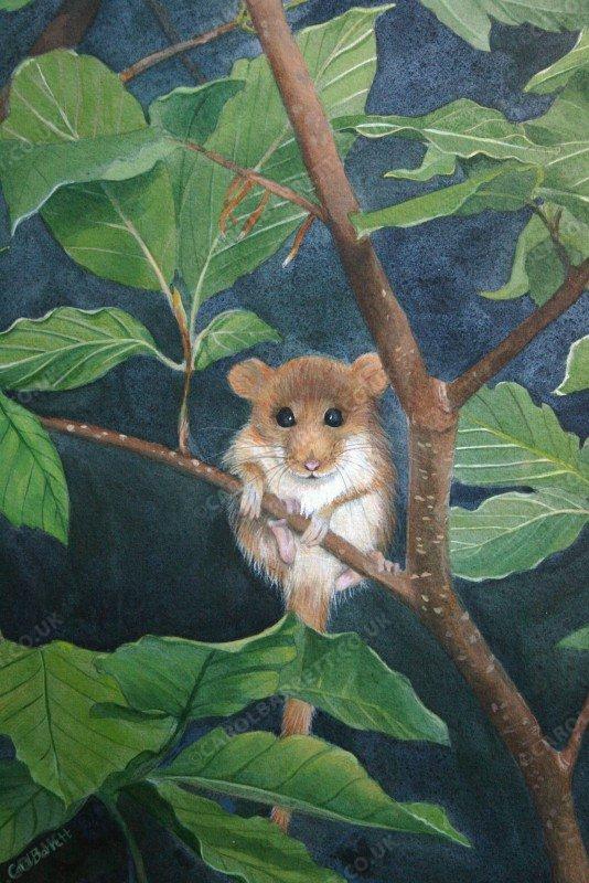 Tiny Visitor ~ Dormouse