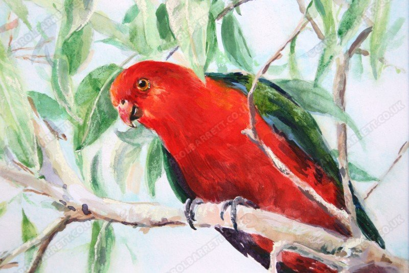 "<span style=""float:left"">Australian King Parrot</span> <span style=""float:right""><a href=""http://www.carolbarrett.co.uk/paintings/australian-king-parrot/?from=/on-specialty-paper-sold/"">More info »</a></span>"