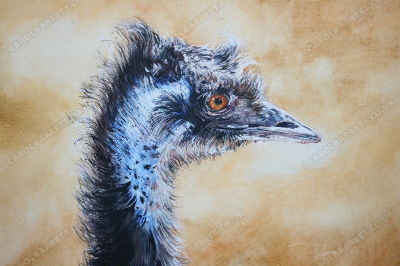 "<span style=""float:left"">Ruffled Emu</span> <span style=""float:right""><a href=""http://www.carolbarrett.co.uk/paintings/emu-profile/?from=/birds-sold/"">More info »</a></span>"