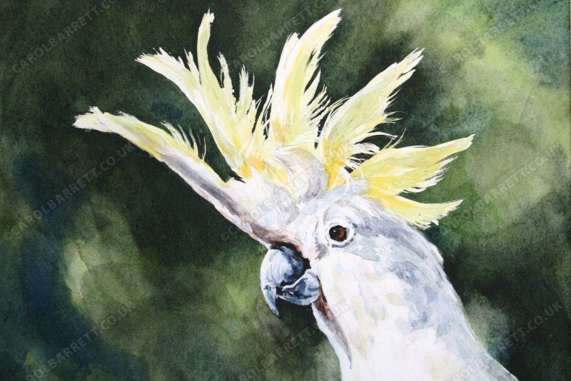 "<span style=""float:left"">Show Off</span> <span style=""float:right""><a href=""http://www.carolbarrett.co.uk/paintings/sulphur-crested-cockatoo/?from=/on-specialty-paper-sold/"">More info »</a></span>"