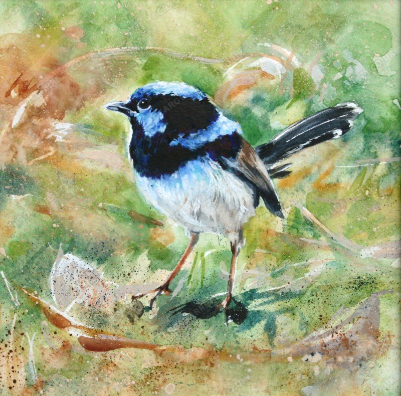 "<span style=""float:left"">Superb Fairy Wren</span> <span style=""float:right""><a href=""http://www.carolbarrett.co.uk/paintings/superb-fairy-wren/?from=/on-specialty-paper-sold/"">More info »</a></span>"