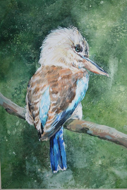 """<span style=""""float:left"""">Blue-winged Kookaburra</span><span style=""""float:right""""><a href=""""http://www.carolbarrett.co.uk/paintings/blue-winged-kookaburra/?from=/birds-sold/"""">More info »</a></span>"""