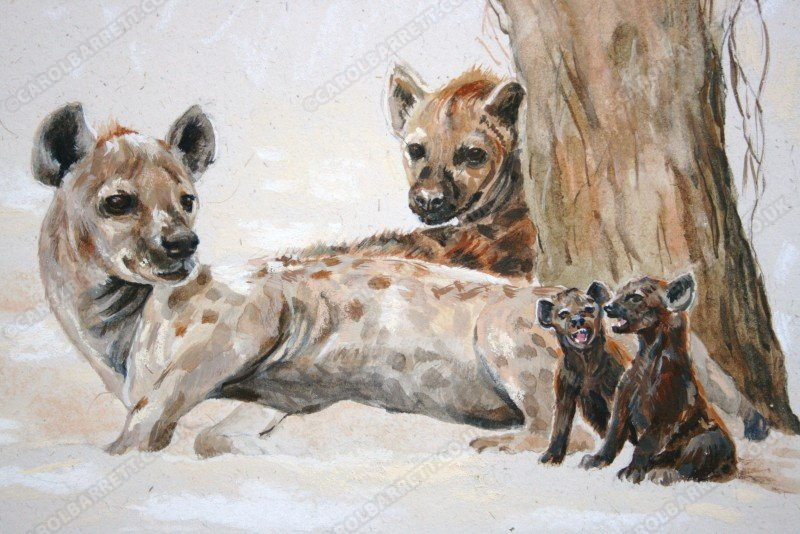 "<span style=""float:left"">Disturbed</span> <span style=""float:right""><a href=""http://www.carolbarrett.co.uk/paintings/disturbed/?from=/wild-dog-hyena-for-sale/"">More info »</a></span>"
