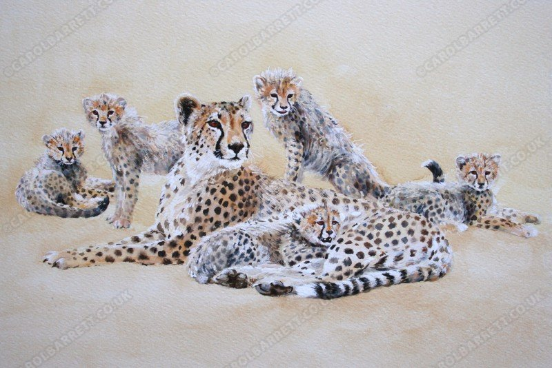 "<span style=""float:left"">Pride and Joy</span> <span style=""float:right""><a href=""http://www.carolbarrett.co.uk/paintings/pride-and-joy/?from=/cheetah-sold/"">More info »</a></span>"