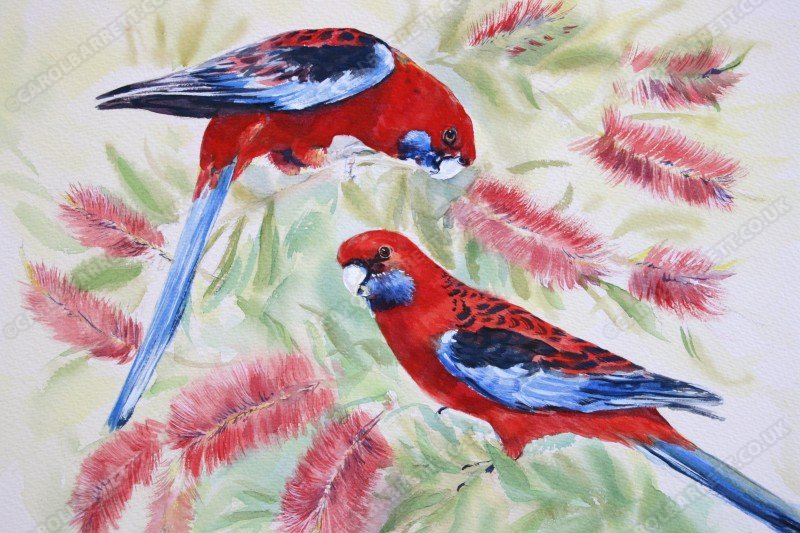 """<span style=""""float:left"""">Crimson Rosella</span><span style=""""float:right""""><a href=""""http://www.carolbarrett.co.uk/paintings/crimson-rosella/?from=/birds-sold/"""">More info »</a></span>"""