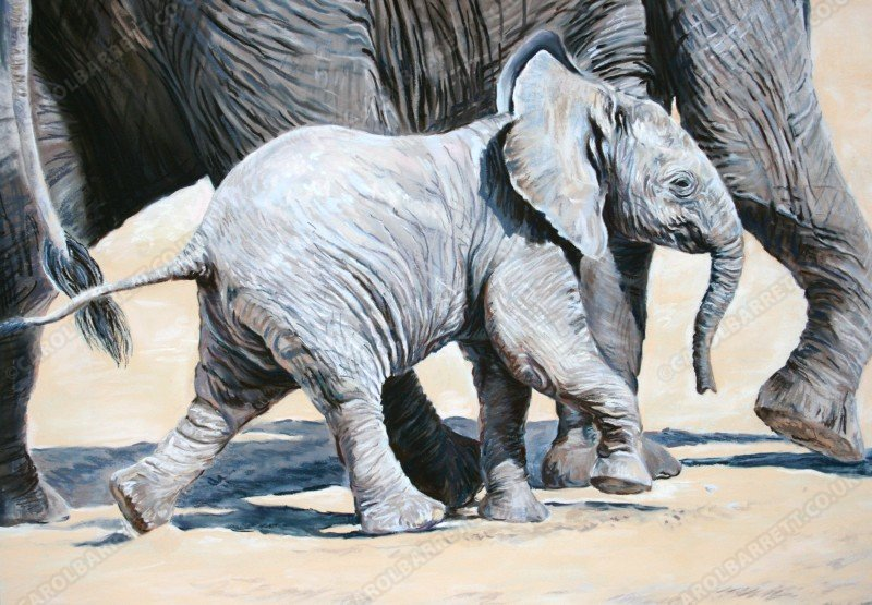 """<span style=""""float:left"""">Baby Steps</span><span style=""""float:right""""><a href=""""http://www.carolbarrett.co.uk/paintings/step-by-step/?from=/elephants-sold/"""">More info »</a></span>"""