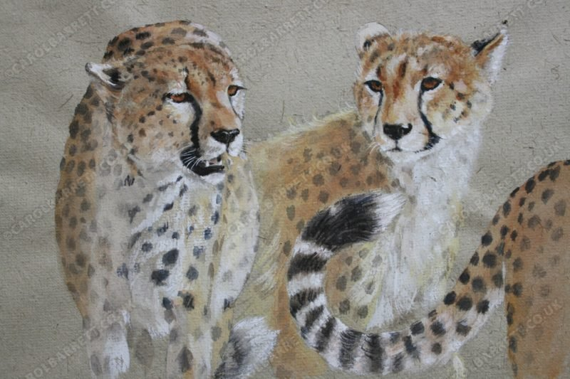 "<span style=""float:left"">Heads and Tails</span> <span style=""float:right""><a href=""http://www.carolbarrett.co.uk/paintings/heads-and-tails/?from=/cheetah-sold/"">More info »</a></span>"