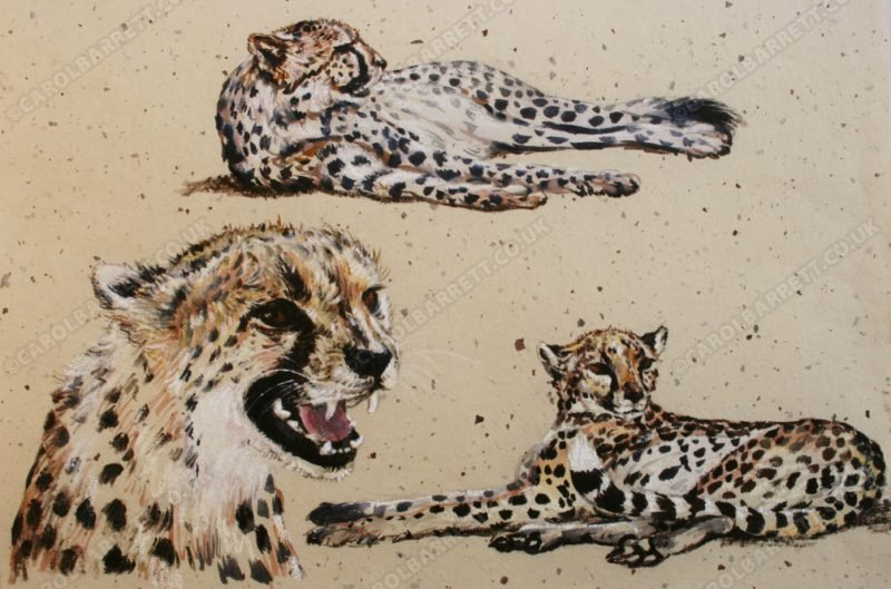 "<span style=""float:left"">Spotted cat</span> <span style=""float:right""><a href=""http://www.carolbarrett.co.uk/paintings/spotted-coat/?from=/cheetah-sold/"">More info »</a></span>"