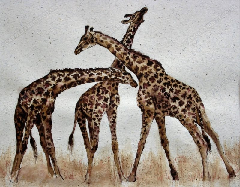 "<span style=""float:left"">Necking Giraffe</span> <span style=""float:right""><a href=""http://www.carolbarrett.co.uk/paintings/necking-giraffe/?from=/african-wildlife-sold/"">More info »</a></span>"