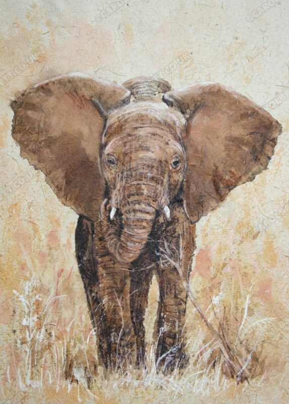 "<span style=""float:left"">Kora</span> <span style=""float:right""><a href=""http://www.carolbarrett.co.uk/paintings/kora/?from=/elephants-sold/"">More info »</a></span>"