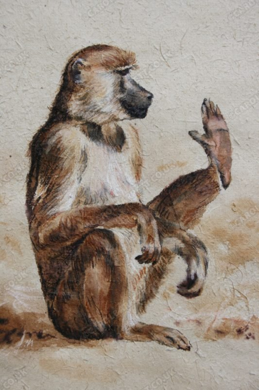 "<span style=""float:left"">High five ( Yellow Baboon)</span> <span style=""float:right""><a href=""http://www.carolbarrett.co.uk/paintings/high-five-yellow-baboon/?from=/primates-sold/"">More info »</a></span>"