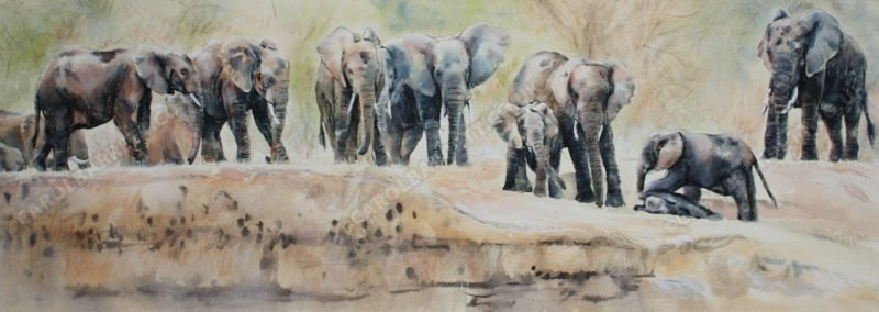 """<span style=""""float:left"""">Banks of the Luangwa</span><span style=""""float:right""""><a href=""""http://www.carolbarrett.co.uk/paintings/banks-of-the-luangwa/?from=/elephants-sold/"""">More info »</a></span>"""