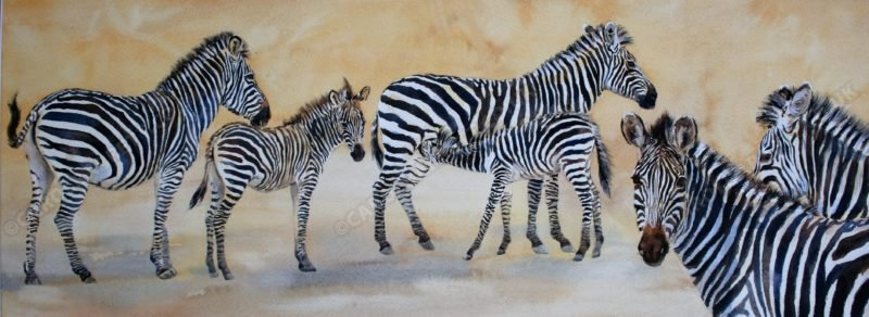 "<span style=""float:left"">Identity Stripes ~ Crawshay Zebra</span> <span style=""float:right""><a href=""http://www.carolbarrett.co.uk/paintings/striped-identity-crawshay-zebra/?from=/african-wildlife-for-sale/"">More info »</a></span>"