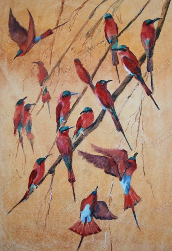 """<span style=""""float:left"""">Summer Visitor ~ Carmine Bee-eater</span><span style=""""float:right""""><a href=""""http://www.carolbarrett.co.uk/paintings/summer-visitor/?from=/birds-sold/"""">More info »</a></span>"""