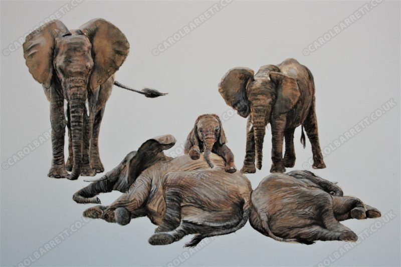 "<span style=""float:left"">Elephants' dreamtime</span> <span style=""float:right""><a href=""http://www.carolbarrett.co.uk/paintings/elephants-dreamland/?from=/elephants-sold/"">More info »</a></span>"