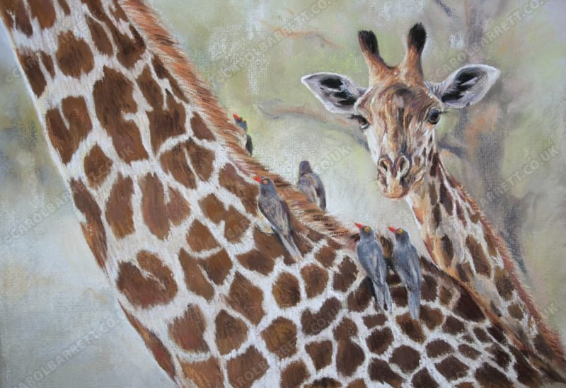 """<span style=""""float:left"""">Thornicroft's Giraffe and feathered friends, ( Red-billed Oxpecker)</span><span style=""""float:right""""><a href=""""http://www.carolbarrett.co.uk/paintings/thornicrofts-giraffe-and-feathered-friends-red-billed-oxpecker/?from=/african-wildlife-sold/"""">More info »</a></span>"""