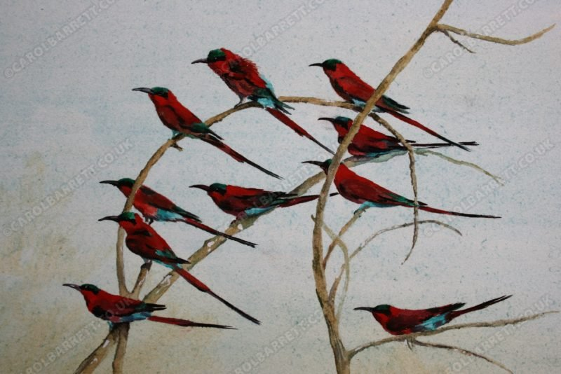 """<span style=""""float:left"""">Synchronicity (Carmine Bee-eater)</span><span style=""""float:right""""><a href=""""http://www.carolbarrett.co.uk/paintings/synchronicity-carmine-bee-eater/?from=/birds-sold/"""">More info »</a></span>"""
