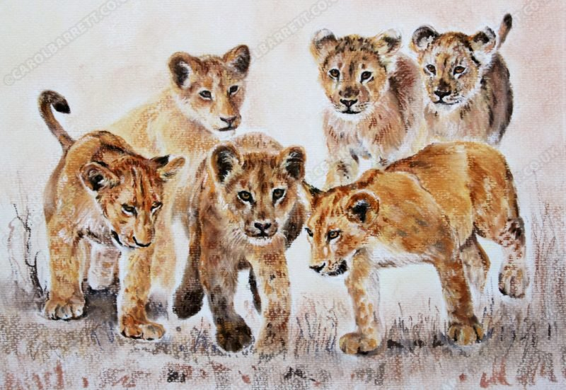 "<span style=""float:left"">Cub bonds</span> <span style=""float:right""><a href=""http://www.carolbarrett.co.uk/paintings/cub-bonds-2/?from=/big-cats-sold/"">More info »</a></span>"