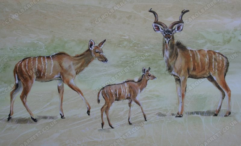 "<span style=""float:left"">Greater Kudu with hind & faun</span> <span style=""float:right""><a href=""http://www.carolbarrett.co.uk/paintings/greater-kudu-with-hind-faun/?from=/african-wildlife-for-sale/"">More info »</a></span>"