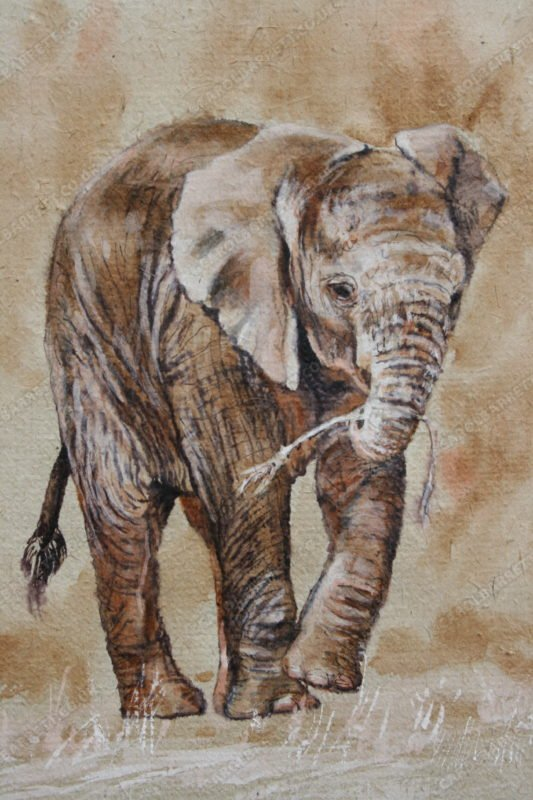 """<span style=""""float:left"""">First brouse</span><span style=""""float:right""""><a href=""""http://www.carolbarrett.co.uk/paintings/first-brouse/?from=/elephants-for-sale/"""">More info »</a></span>"""