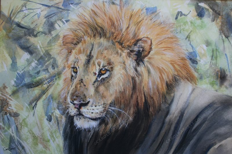 """<span style=""""float:left"""">Monarch of Selinda</span><span style=""""float:right""""><a href=""""http://www.carolbarrett.co.uk/paintings/monarch-of-selinda/?from=/big-cats-for-sale/"""">More info »</a></span>"""