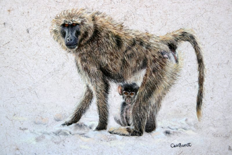 """<span style=""""float:left"""">Stay Close</span><span style=""""float:right""""><a href=""""http://www.carolbarrett.co.uk/paintings/stay-close-2/?from=/primates-sold/"""">More info »</a></span>"""