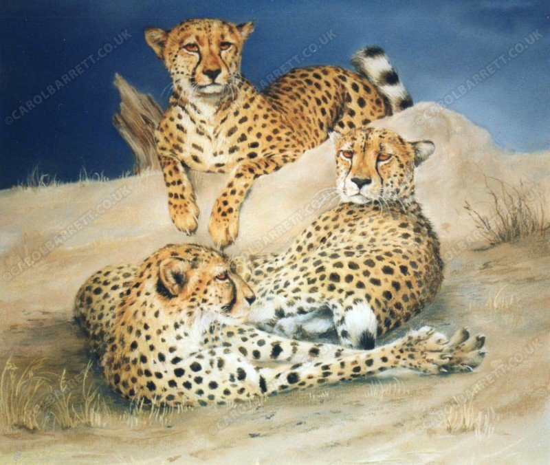 "<span style=""float:left"">Cheetah Mound</span> <span style=""float:right""><a href=""https://www.carolbarrett.co.uk/paintings/cheetah-mound/?from=/cheetah-for-sale/"">More info »</a></span>"