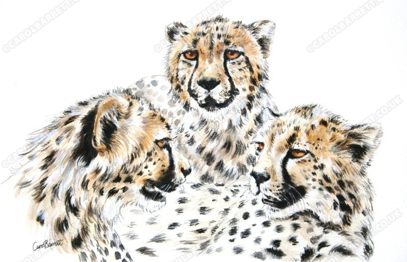 "<span style=""float:left"">Triptych Cheetah</span> <span style=""float:right""><a href=""https://www.carolbarrett.co.uk/paintings/triptych-cheetah/?from=/cheetah-for-sale/"">More info »</a></span>"