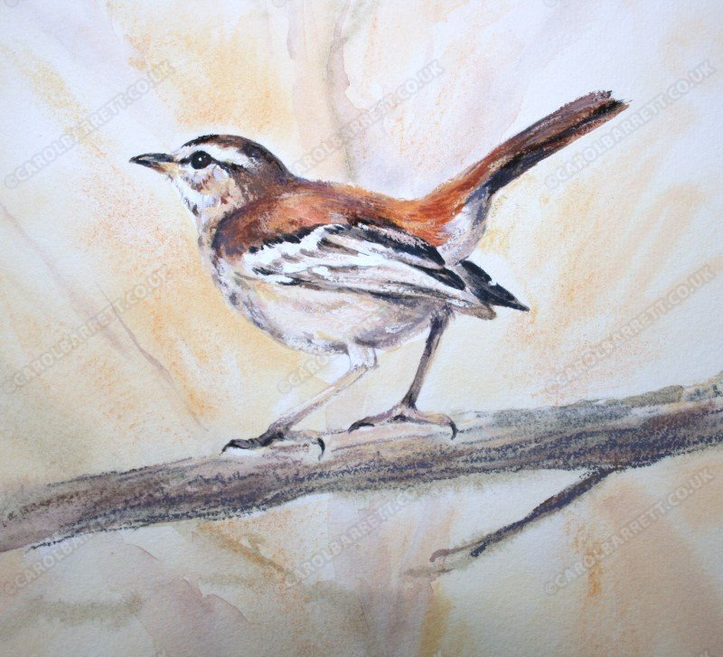 "<span style=""float:left"">Red-backed Scrub Robin</span> <span style=""float:right""><a href=""https://www.carolbarrett.co.uk/paintings/red-backed-scrub-robin-2/?from=/birds-for-sale/"">More info »</a></span>"