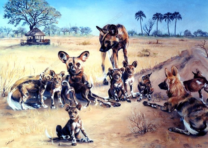 """<span style=""""float:left"""">Selinda Pack</span><span style=""""float:right""""><a href=""""https://www.carolbarrett.co.uk/paintings/wild-dogs-in-selinda/?from=/wild-dog-and-hyena-sold/"""">More info »</a></span>"""