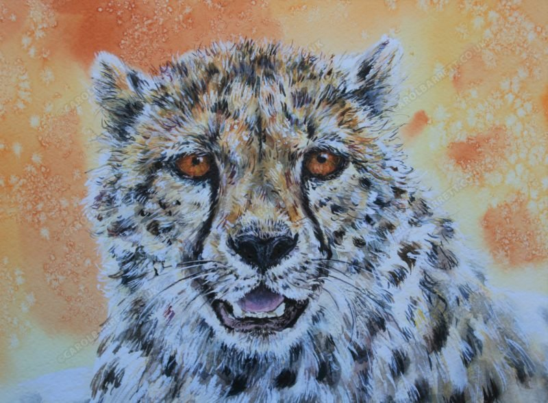 "<span style=""float:left"">Shadow ~ Total sale proceeds will be donated to The Cheetah Conservation Fund (CCF)</span> <span style=""float:right""><a href=""https://www.carolbarrett.co.uk/paintings/shadow/?from=/cheetah-for-sale/"">More info »</a></span>"