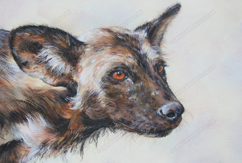 "<span style=""float:left"">Tribute to Newky</span> <span style=""float:right""><a href=""https://www.carolbarrett.co.uk/paintings/tribute-to-newky/?from=/wild-dog-hyena-for-sale/"">More info »</a></span>"