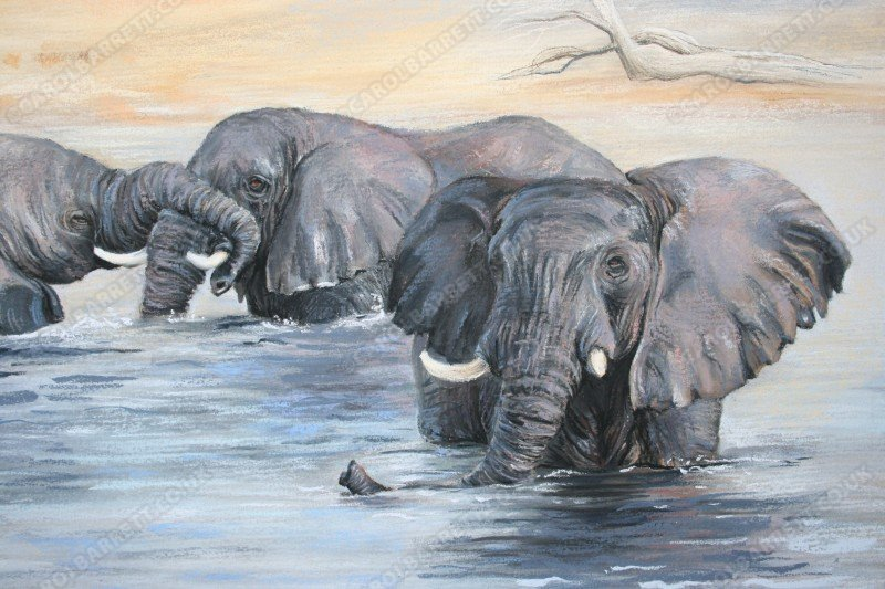 "<span style=""float:left"">Water bonds (bull elephants)</span> <span style=""float:right""><a href=""https://www.carolbarrett.co.uk/paintings/water-bonds-bull-elephants/?from=/elephants-for-sale/"">More info »</a></span>"