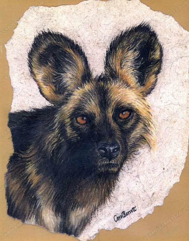 """<span style=""""float:left"""">Alpha male ~ African Wild dog</span><span style=""""float:right""""><a href=""""https://www.carolbarrett.co.uk/paintings/wild-dog-alpha-male/?from=/wild-dog-and-hyena-sold/"""">More info »</a></span>"""
