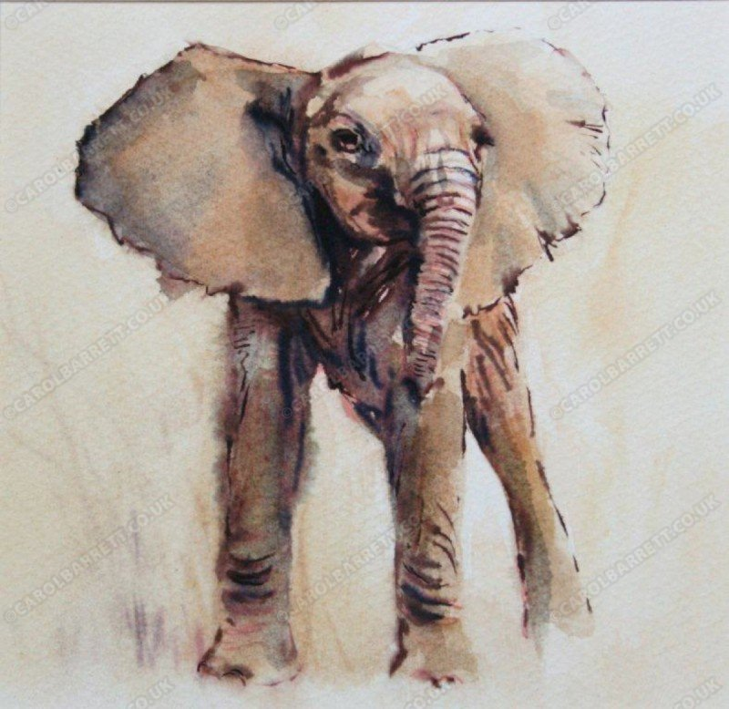 "<span style=""float:left"">Act of Bravado</span> <span style=""float:right""><a href=""https://www.carolbarrett.co.uk/paintings/act-of-bravado/?from=/elephants-sold/"">More info »</a></span>"