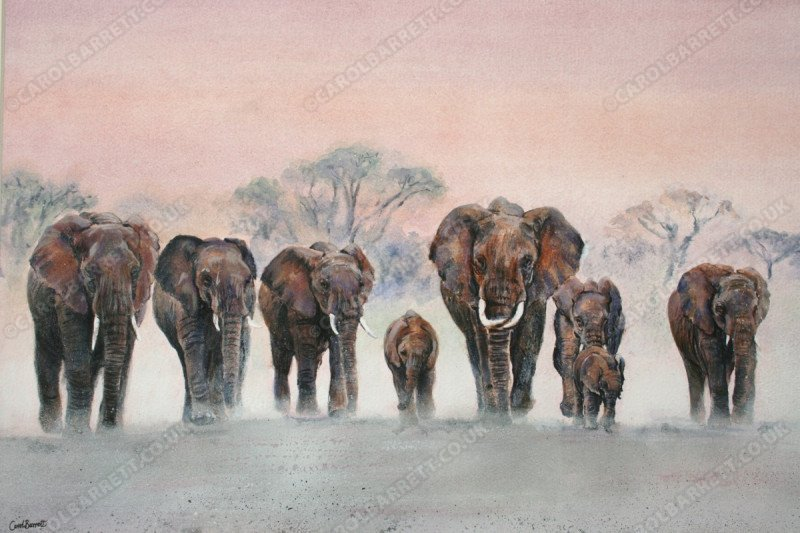 "<span style=""float:left"">Advancing</span> <span style=""float:right""><a href=""https://www.carolbarrett.co.uk/paintings/advancing/?from=/elephants-sold/page/3/"">More info »</a></span>"