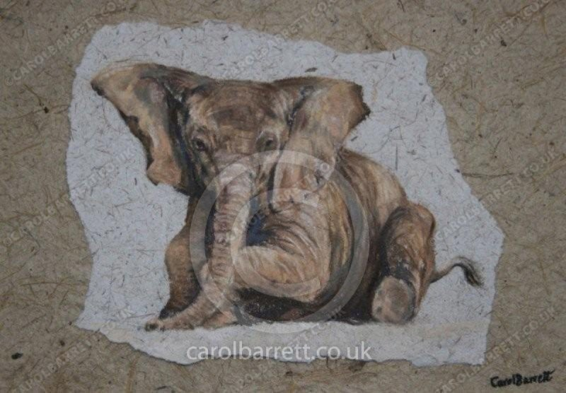 "<span style=""float:left"">All ears</span> <span style=""float:right""><a href=""https://www.carolbarrett.co.uk/paintings/all-ears/?from=/elephants-sold/page/2/"">More info »</a></span>"