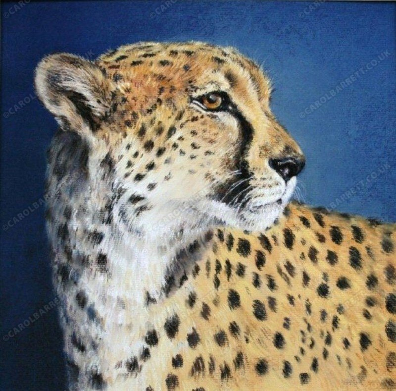 "<span style=""float:left"">Ambassador Cheetah</span> <span style=""float:right""><a href=""https://www.carolbarrett.co.uk/paintings/ambassador-cheetah/?from=/cheetah-sold/"">More info »</a></span>"