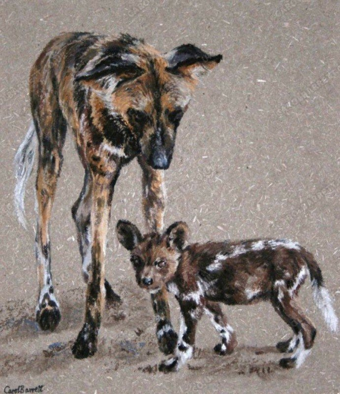 """<span style=""""float:left"""">Attentive pack member – African Wild Dog</span><span style=""""float:right""""><a href=""""https://www.carolbarrett.co.uk/paintings/attentive-pack-member-african-wild-dog/?from=/wild-dog-and-hyena-sold/"""">More info »</a></span>"""
