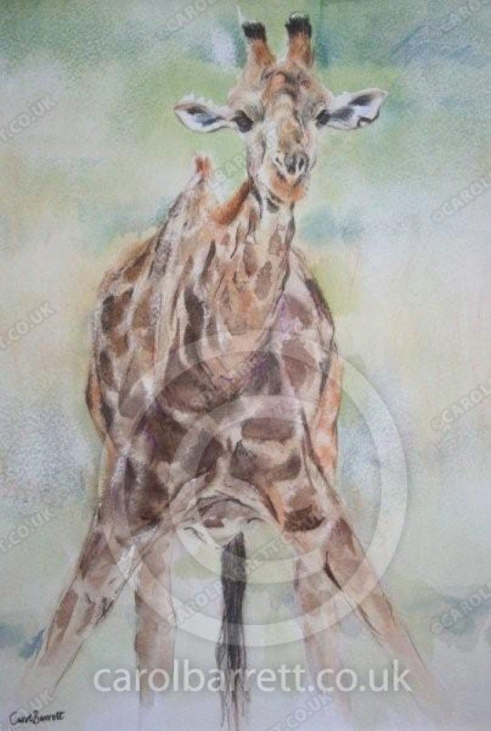"<span style=""float:left"">Awkward pose</span> <span style=""float:right""><a href=""https://www.carolbarrett.co.uk/paintings/awkward-pose/?from=/african-wildlife-sold/"">More info »</a></span>"