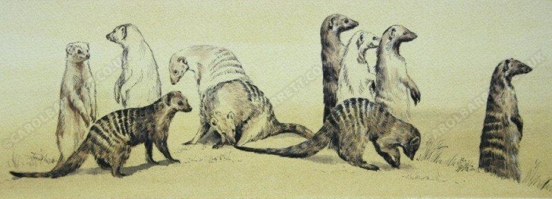 "<span style=""float:left"">Banded Mongoose troop</span> <span style=""float:right""><a href=""https://www.carolbarrett.co.uk/paintings/banded-mongoose-troop/?from=/african-wildlife-sold/"">More info »</a></span>"