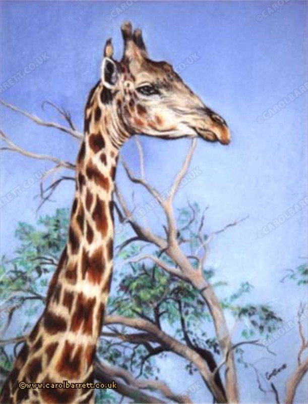 "<span style=""float:left"">Bird's-eye View (Oxpecker & Giraffe)</span> <span style=""float:right""><a href=""https://www.carolbarrett.co.uk/paintings/birds-eye-view-oxpecker-giraffe/?from=/african-wildlife-sold/"">More info »</a></span>"